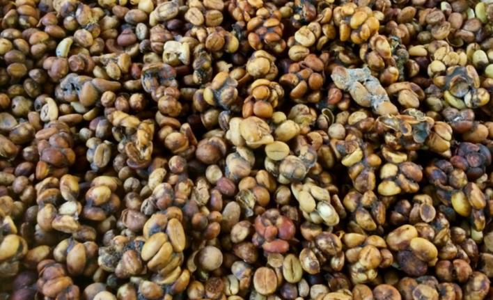 Nejdražší káva na světě